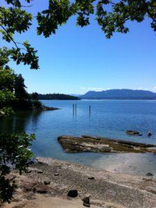 thetis island 2